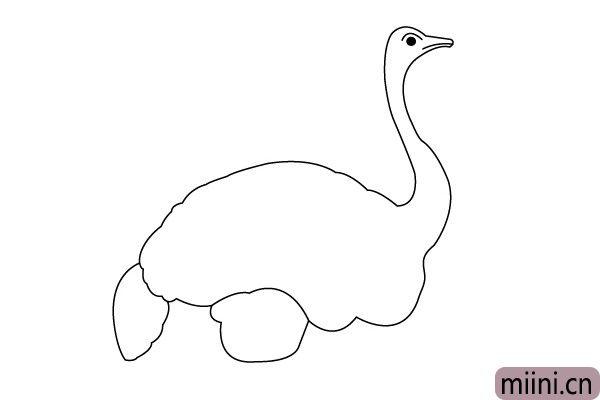 5.画上鸵鸟的尾巴轮廓和腿部肌肉。