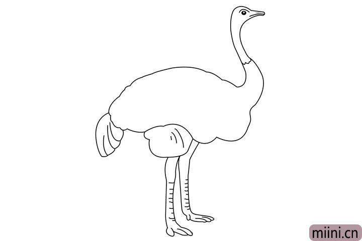 6.最后给鸵鸟画上又长又粗的脚,然后完善鸵鸟的羽毛。