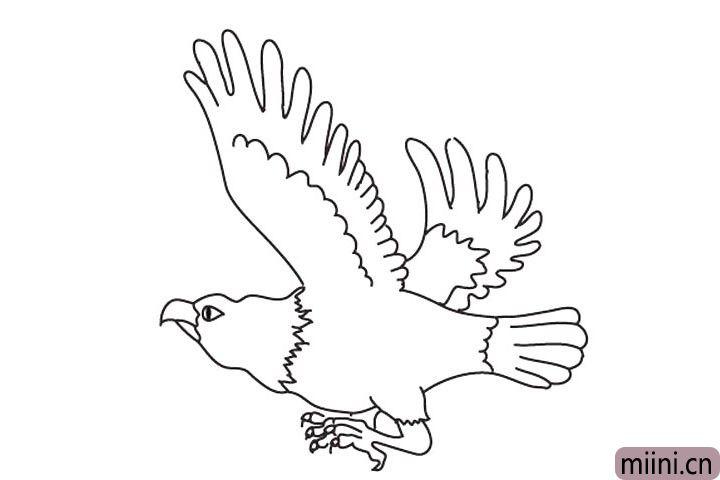 猛禽老鹰简笔画步骤教程