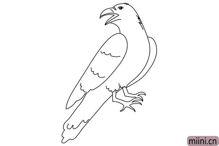 6.最后画另外一只遮挡住的翅膀轮廓,然后在翅膀和尾部用小波浪线画出它的羽毛层次。