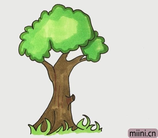 一棵挺拔的大树简笔画步骤教程