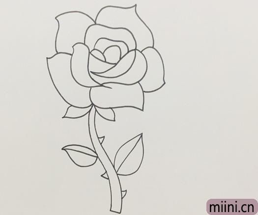 盛开玫瑰花的画法步骤
