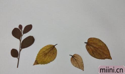 树叶贴画05.jpg