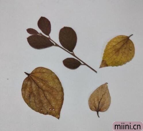 树叶贴画04.jpg