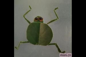 用树叶制作一个小青蛙的树叶贴画步骤教程
