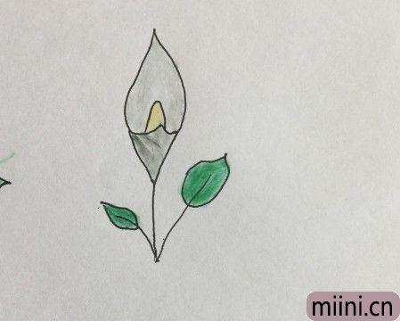 马蹄莲06