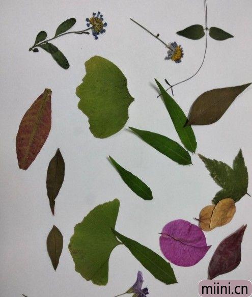 树叶贴画02