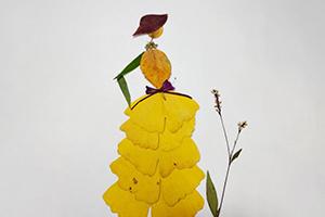 用银杏叶制作一位高贵的女子树叶贴画步骤教程