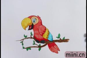 学舌的鹦鹉简笔画步骤教程