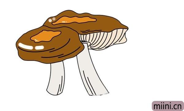 密环菌简笔画